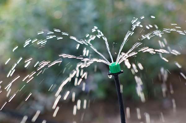 Drip irrigation can save you money if done well